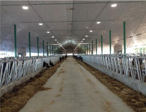 mangeoire vache laitière installation agricole / Équipements PFB
