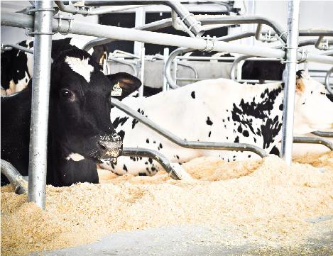 logettes animaux installation pour ferme production animal