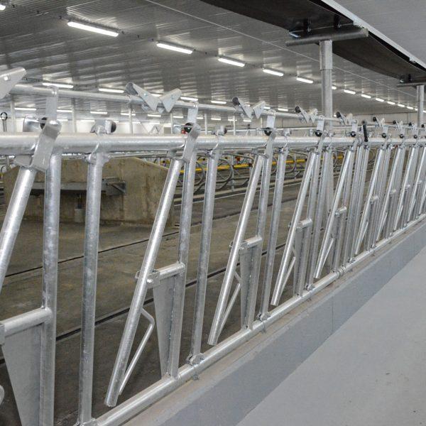 mangeoire carcan vache laitière installation agricole / Équipements PFB